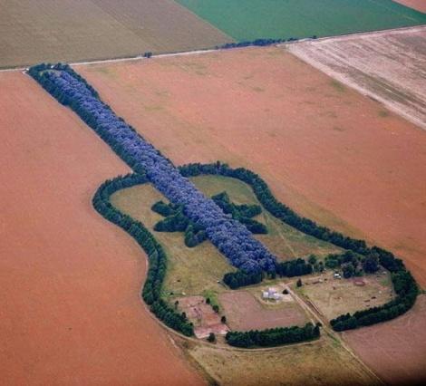 Forest Guitar, Argentina